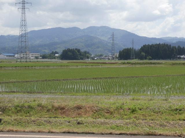 おいしいお米が育っています♪